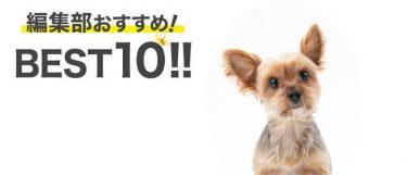 小型犬サイズのワンちゃんにおすすめのキャリーバッグBEST10!