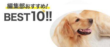 大型犬イメージ