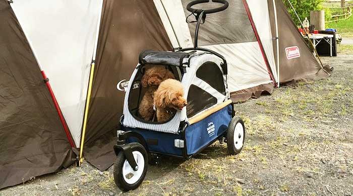ペットカートに乗ったトイプー