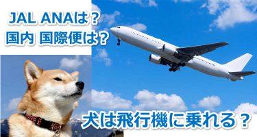 飛行機と犬