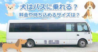 市営バス 都営バス 夜行バス… バス運行会社のペット持ち込みルールを調査【ワンNAVI】