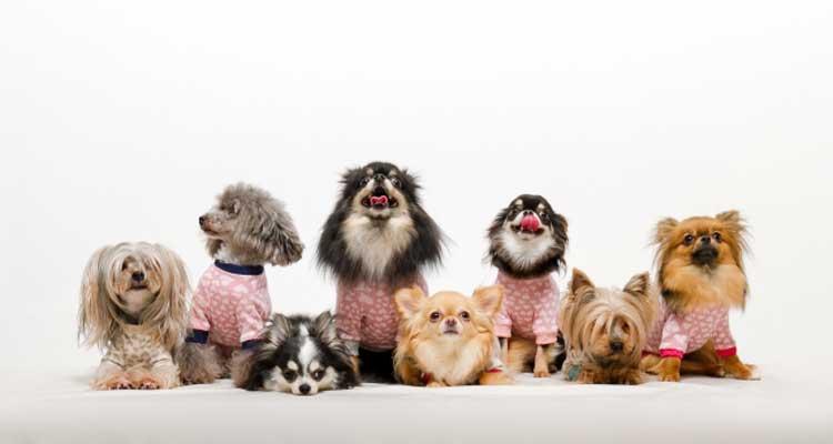 いろんな犬種のワンちゃんたち