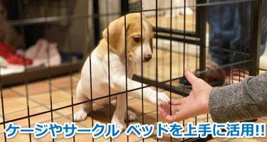 ケージの中からお手する犬